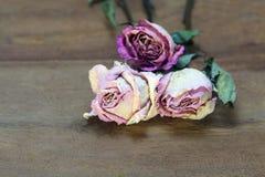 Высушенные розовые розы на старой деревянной предпосылке стоковое изображение