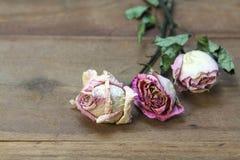 Высушенные розовые розы на старой предпосылке деревянной доски стоковые изображения rf