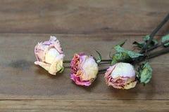 Высушенные розовые розы на старой предпосылке деревянной доски стоковая фотография rf