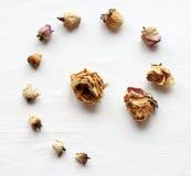 Высушенные розы на белой предпосылке Стоковые Фото