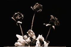 высушенные розы Стоковые Изображения RF