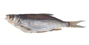 Высушенные рыбы изолированные на белизне Стоковое Фото