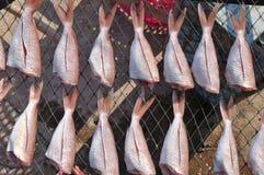 Высушенные рыбы моря на сетчатом подносе в процессе методов еды засыхания Солнця Консервация еды схематическая стоковое изображение