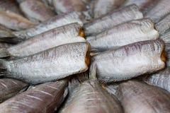 Высушенные рыбы на бамбуковой решетке стоковое изображение rf