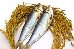 Высушенные рыбы на изолированных неочищенных рисах Стоковые Фото