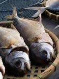 высушенные рыбы солёные стоковые фото