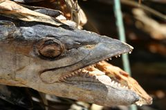 Высушенные рыбы для сбывания Стоковые Фотографии RF