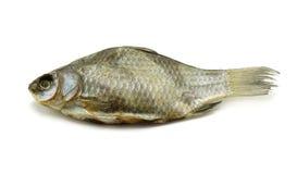 высушенные рыбы Стоковые Фотографии RF