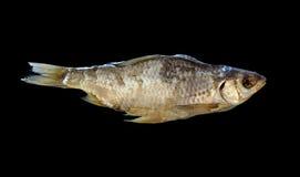 высушенные рыбы Стоковая Фотография