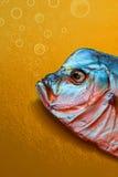 Высушенные рыбы Vomero Стоковая Фотография RF