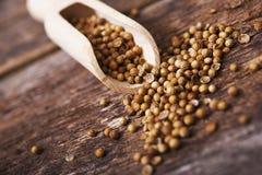 Высушенные семена кориандра стоковое фото rf