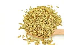 Высушенные семена фенхеля Стоковая Фотография