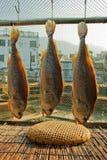 высушенные сохраненные рыбы посоленными Стоковое фото RF