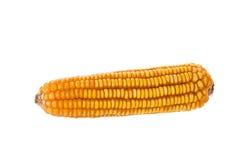Высушенные старые желтые corns на белой предпосылке Стоковое фото RF