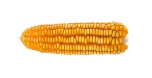 Высушенные старые желтые corns на белой предпосылке Стоковые Фотографии RF