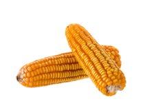 Высушенные старые желтые corns на белой предпосылке Стоковые Фото