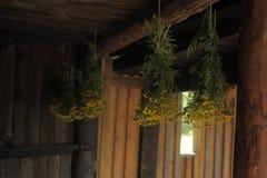 Высушенные травы и цветки в лесистой хате Стоковое фото RF