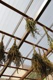 высушенные травы Стоковые Фотографии RF