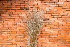 Высушенные цветки в вазе, апельсин комнаты Стоковая Фотография