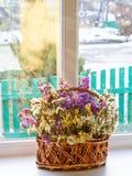 Высушенные цветки в корзине на окне против предпосылки зимы Стоковая Фотография RF