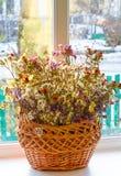 Высушенные цветки в корзине на окне против предпосылки зимы Стоковые Фото