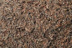 Высушенные цветки и трава на том основании Стоковая Фотография RF