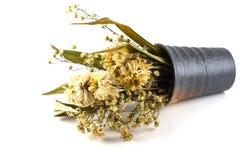 Высушенные цветки на белой предпосылке Стоковые Изображения RF
