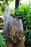 Высушенные цветки на деревянном журнале с картавить предпосылкой стоковое изображение
