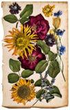 Высушенные цветки над постаретой бумагой стиль картины маслом Стоковые Изображения