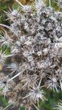 Высушенные цветки осени Стоковое Фото