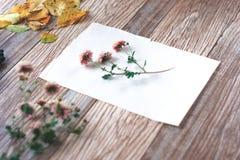 Высушенные цветки с листьями осени на деревянной предпосылке Стоковое Изображение