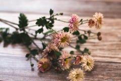 Высушенные цветки с листьями осени на деревянной предпосылке Стоковые Изображения RF