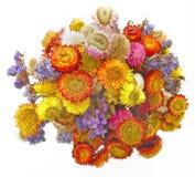высушенные цветки Стоковая Фотография