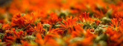 высушенные цветки Стоковое Изображение RF