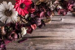 высушенные цветки стоковые изображения