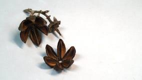 высушенные цветки Стоковые Фото