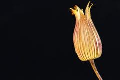 Высушенные цветок/листво Стоковые Фотографии RF