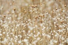 Высушенные цветок и трава поля для предпосылки природы стоковое изображение rf