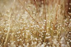Высушенные цветок и трава поля для предпосылки природы стоковая фотография