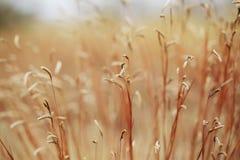 Высушенные цветок и трава поля для предпосылки природы стоковое фото