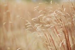 Высушенные цветок и трава поля для предпосылки природы стоковая фотография rf