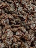Высушенные черные вишни стоковое фото