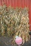 Высушенные шелухи пшеницы и мозоли Стоковые Фотографии RF
