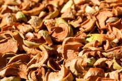 высушенные яблоки стоковое фото rf