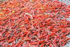 высушенные chilies Стоковое Изображение