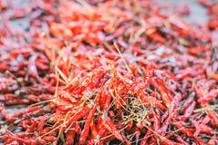 высушенные chilies Стоковые Изображения RF