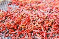 высушенные chilies Стоковые Фото
