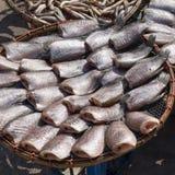 высушенные fishs Стоковое Изображение RF