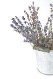 Высушенные sprigs лаванды Стоковые Изображения RF