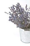 Высушенные sprigs лаванды Стоковое Изображение